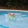 Charlie playing in the pool – Apr 2013